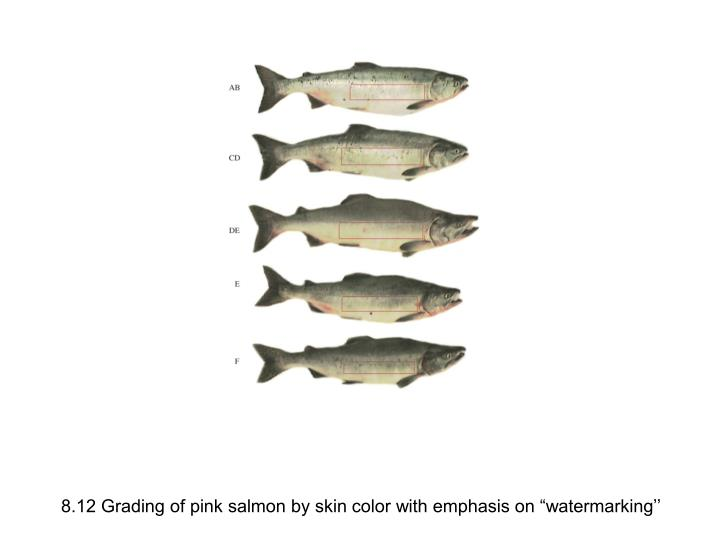 """8.12 Grading of pink salmon by skin color with emphasis on """"watermarking''"""