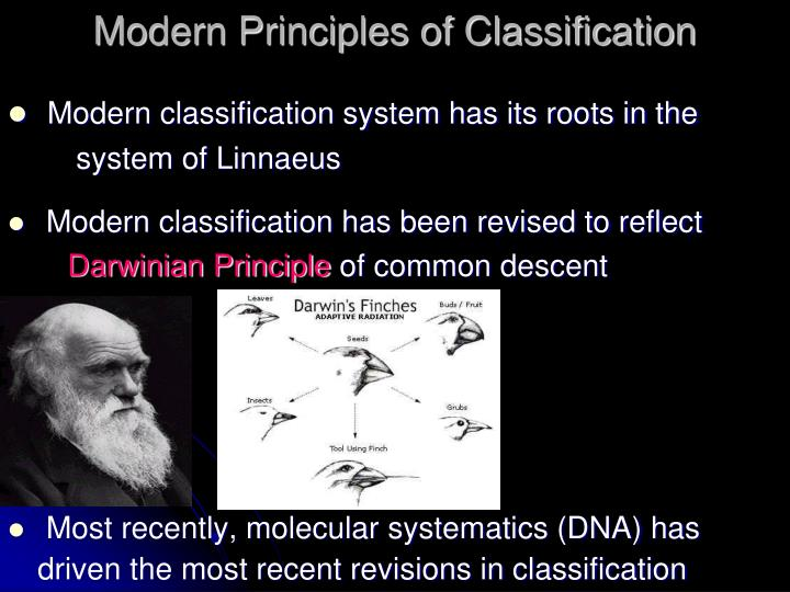 Modern Principles of Classification