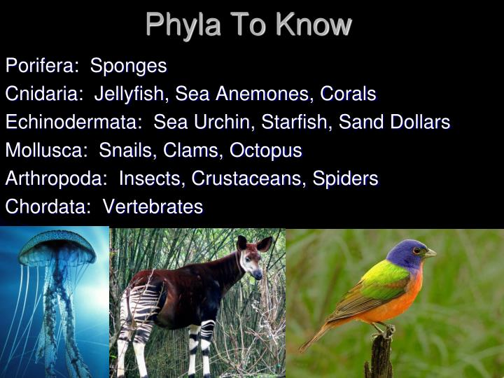 Phyla To Know