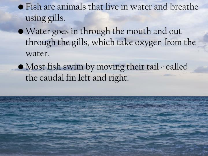 Fish are animals that live in water and breathe using gills.