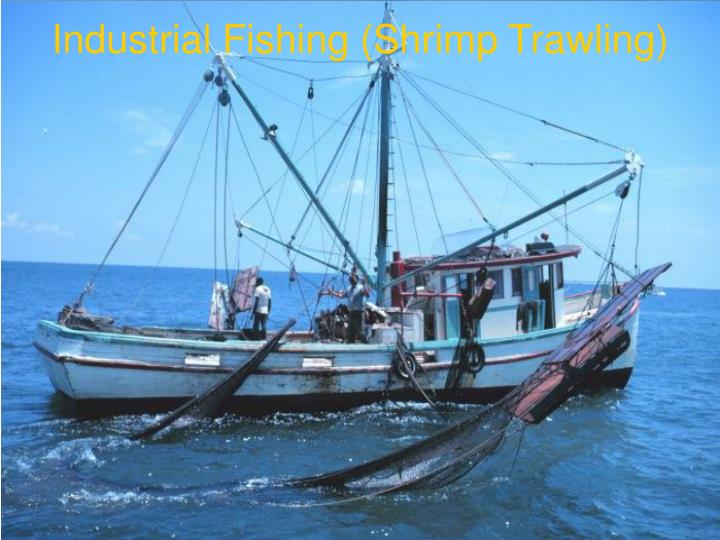 Industrial Fishing (Shrimp Trawling)‏