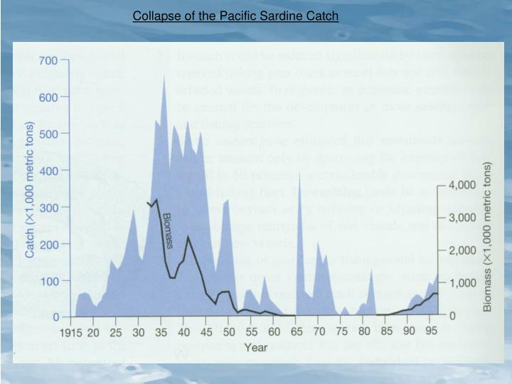Collapse of the Pacific Sardine Catch