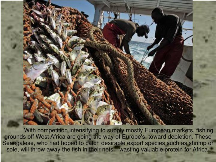 With competition intensifying to supply mostly European markets, fishing grounds off West Africa are going the way of Europe's: toward depletion. These Senegalese, who had hoped to catch desirable export species such as shrimp or sole, will throw away the fish in their nets—wasting valuable protein for Africa.
