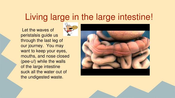 Living large in the large intestine!