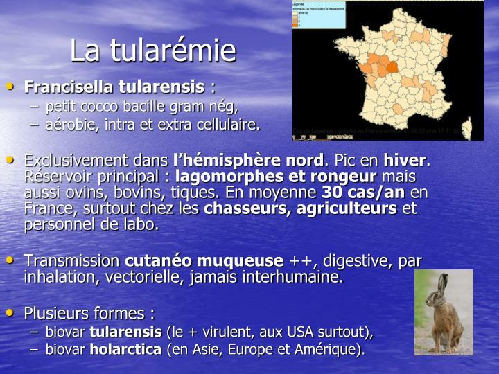 La tularémie