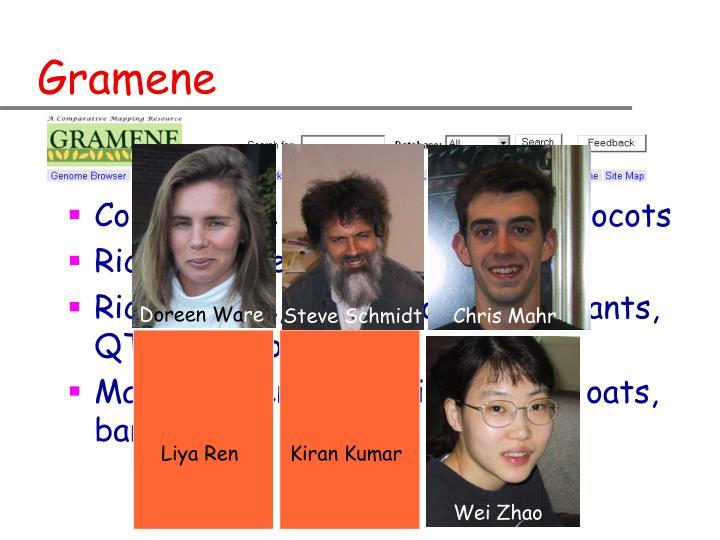 Comparative genomics among monocots