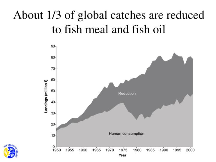 About 1/3 of global catches are reduced to fish meal and fish oil