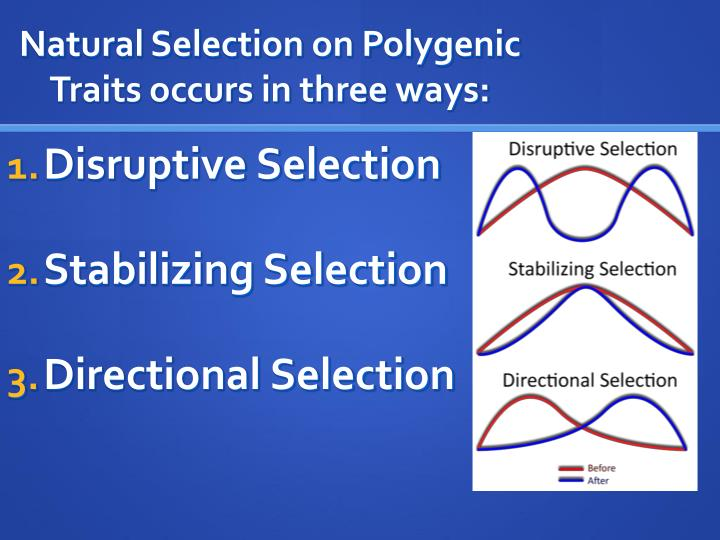 Natural Selection on Polygenic Traits occurs in three ways: