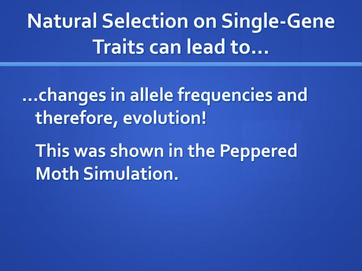 Natural Selection on Single-Gene Traits can lead to…