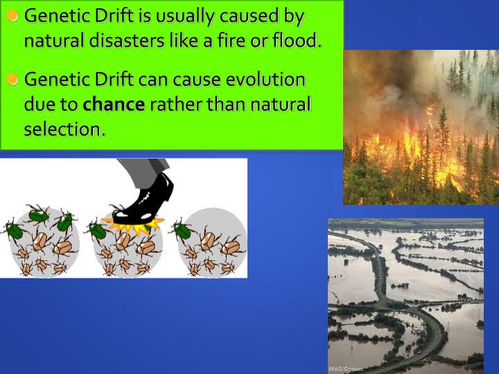 Genetic Drift is usually caused by natural disasters like a fire or flood.