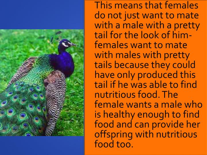This means that females do not just want to mate with a male with a pretty tail for the look of him- females want to mate with males with pretty tails because they could have only produced this tail if he was able to find nutritious food. The female wants a male who is healthy enough to find food and can provide her offspring with nutritious food too.