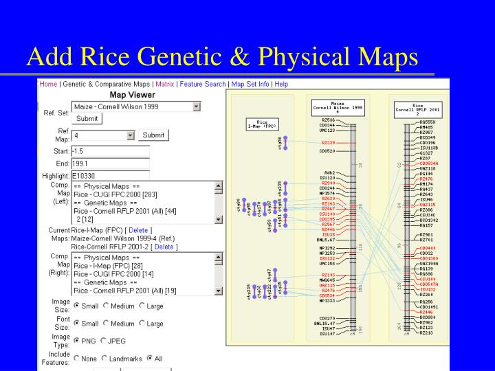 Add Rice Genetic & Physical Maps