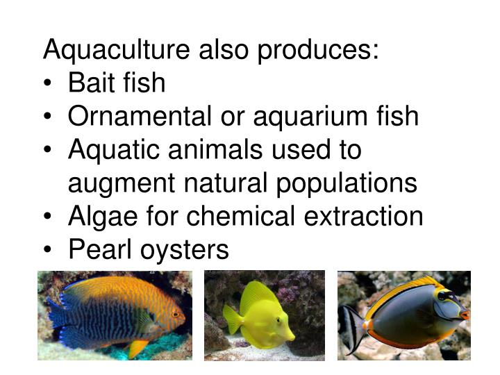 Aquaculture also produces: