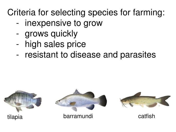 Criteria for selecting species for farming: