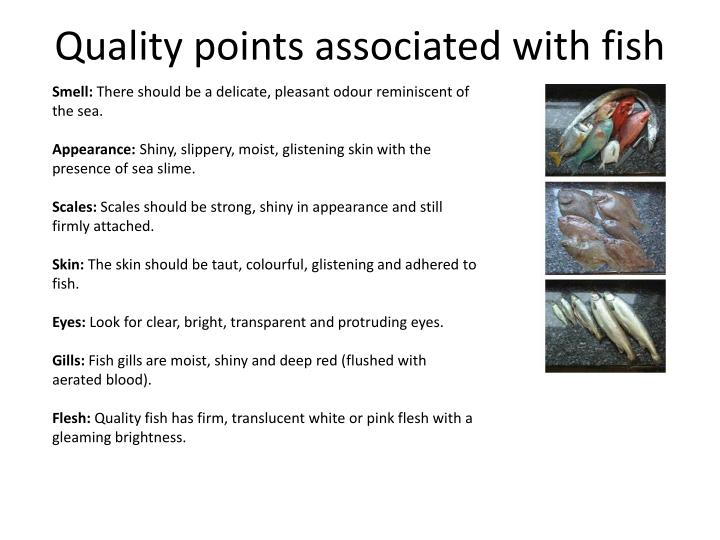 Quality points associated with fish