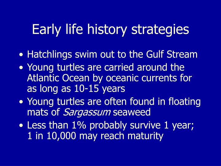 Early life history strategies