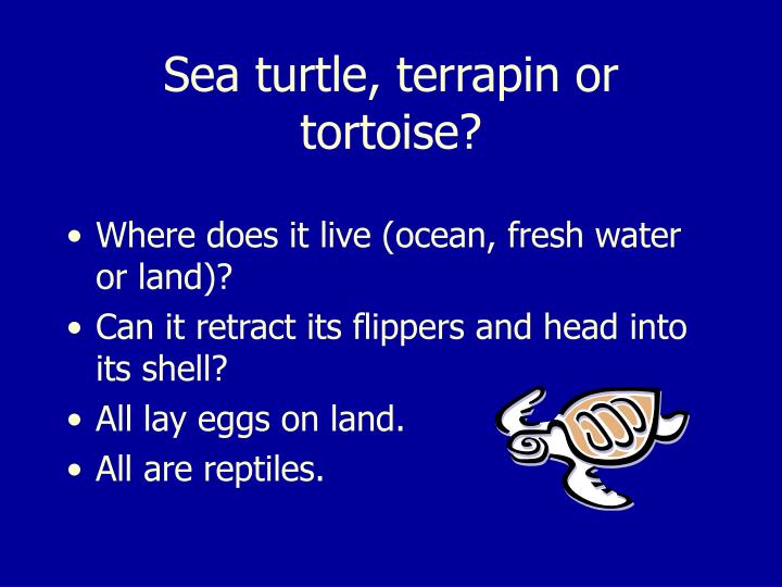 Sea turtle, terrapin or tortoise?