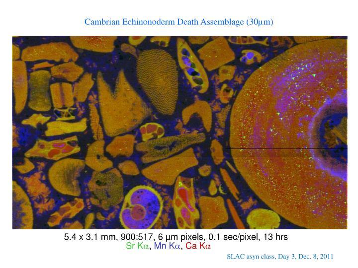 Cambrian Echinonoderm Death Assemblage (30µm)