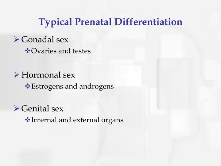 Typical Prenatal Differentiation