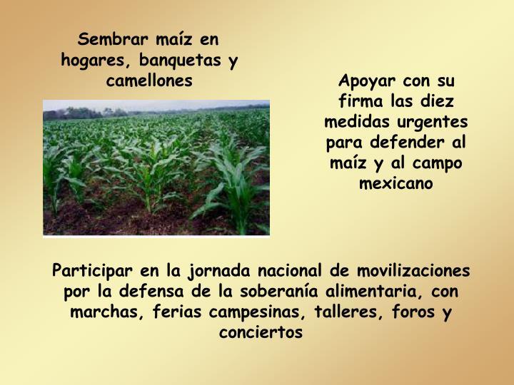 Apoyar con su firma las diez medidas urgentes para defender al maíz y al campo mexicano