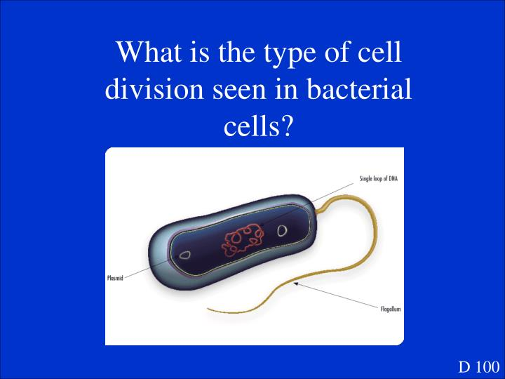What is the type of cell division seen in bacterial cells?