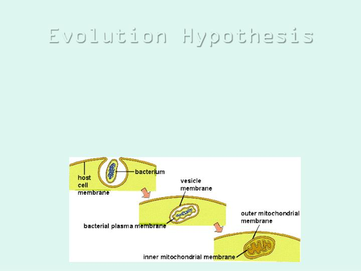 Evolution Hypothesis
