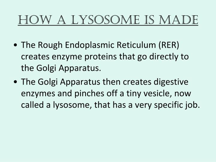 How a Lysosome is Made