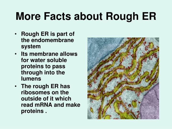 More Facts about Rough ER