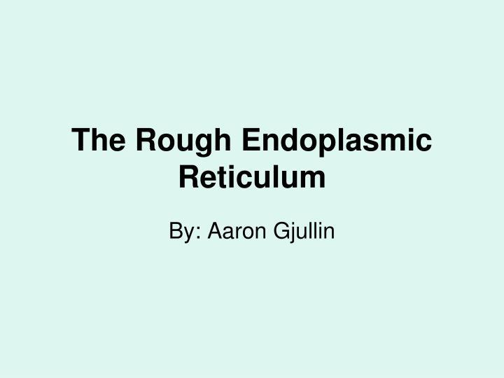 The Rough Endoplasmic Reticulum