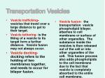 transportation vesicles