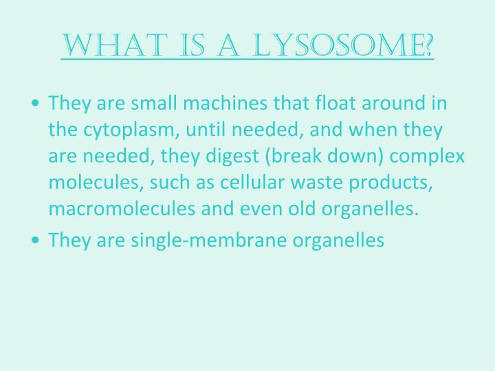 What is a Lysosome?