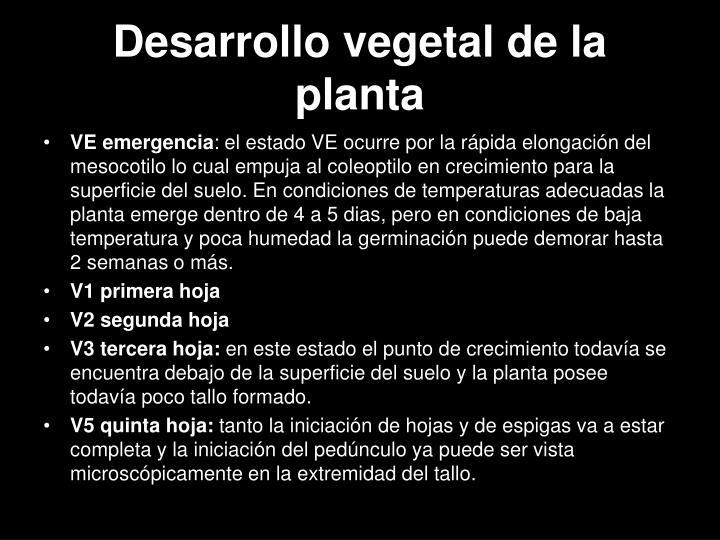 Desarrollo vegetal de la planta
