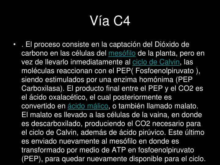 Vía C4