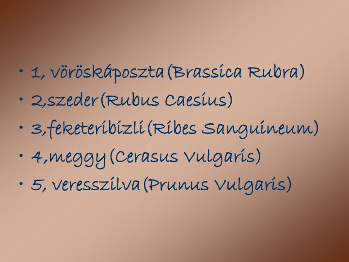 1, vöröskáposzta(Brassica Rubra)