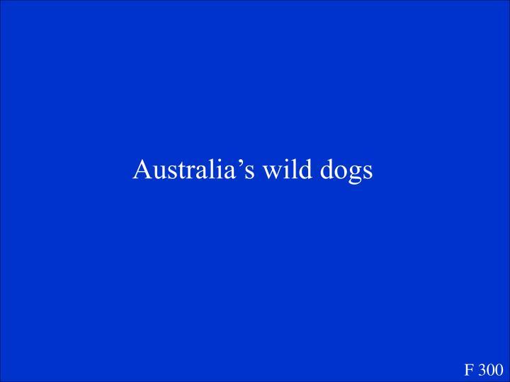 Australia's wild dogs