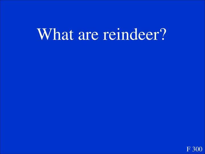 What are reindeer?