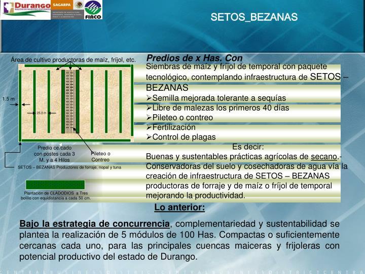 SETOS_BEZANAS
