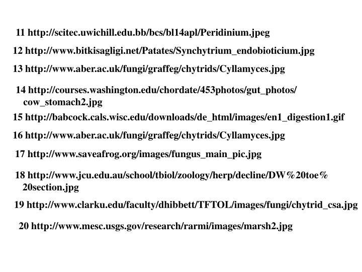 11 http://scitec.uwichill.edu.bb/bcs/bl14apl/Peridinium.jpeg
