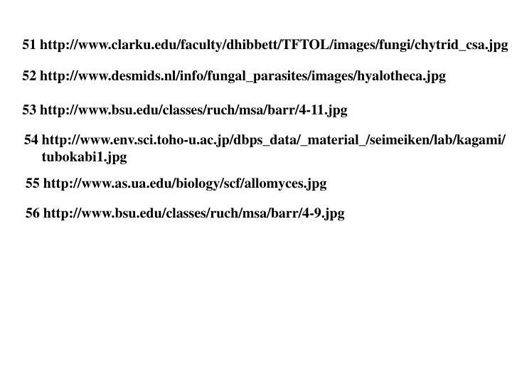 51 http://www.clarku.edu/faculty/dhibbett/TFTOL/images/fungi/chytrid_csa.jpg