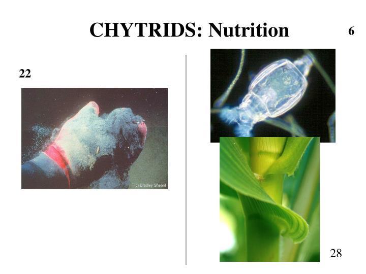 CHYTRIDS: Nutrition