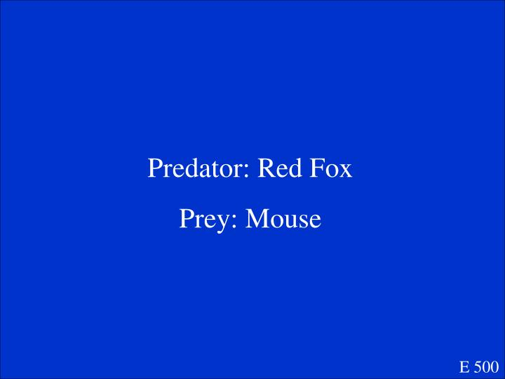 Predator: Red Fox