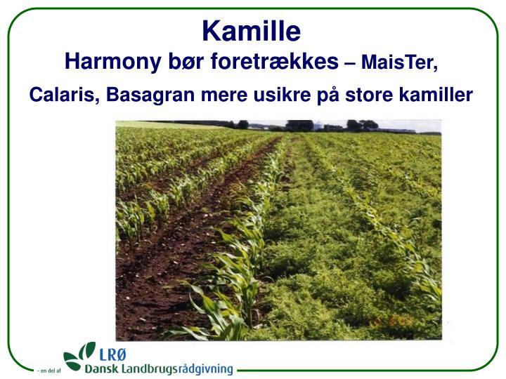 Kamille