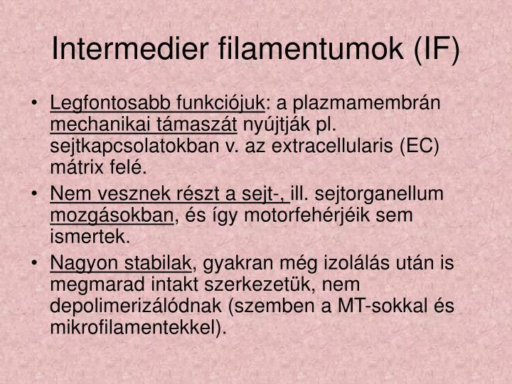 Intermedier filamentumok (IF)