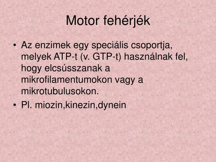 Motor fehérjék