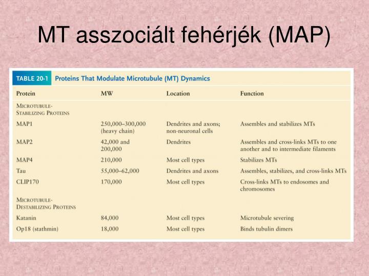 MT asszociált fehérjék (MAP)