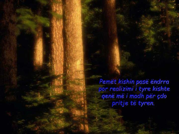 Pemët kishin pasë ëndrra por realizimi i tyre kishte qenë më i madh për