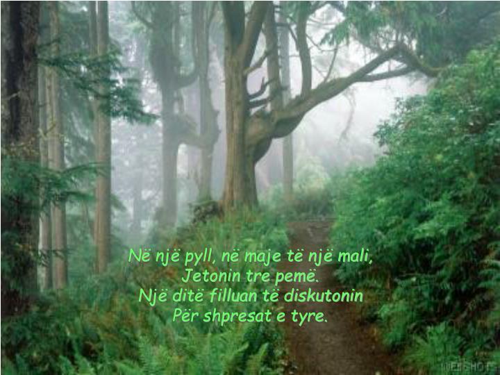 Në një pyll, në maje të një mali,