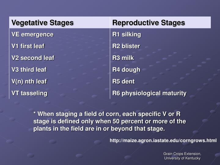 * When staging a field of corn, each specific V or R stage is defined only when 50 percent or more of the plants in the field are in or beyond that stage.