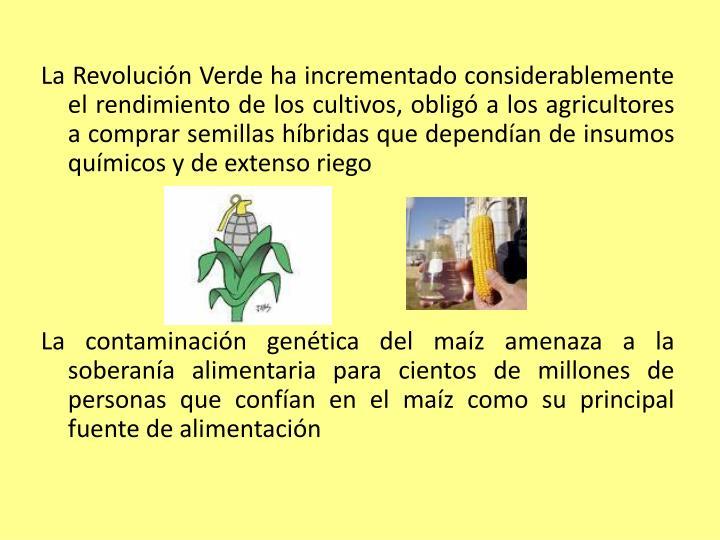 La Revolución Verde ha incrementado considerablemente el rendimiento de los cultivos, obligó a los agricultores a comprar semillas híbridas que dependían de insumos químicos y de extenso riego