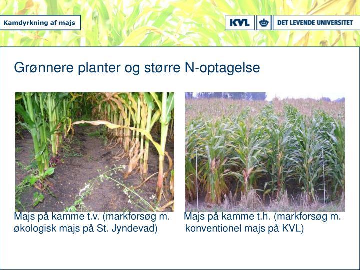Grønnere planter og større N-optagelse